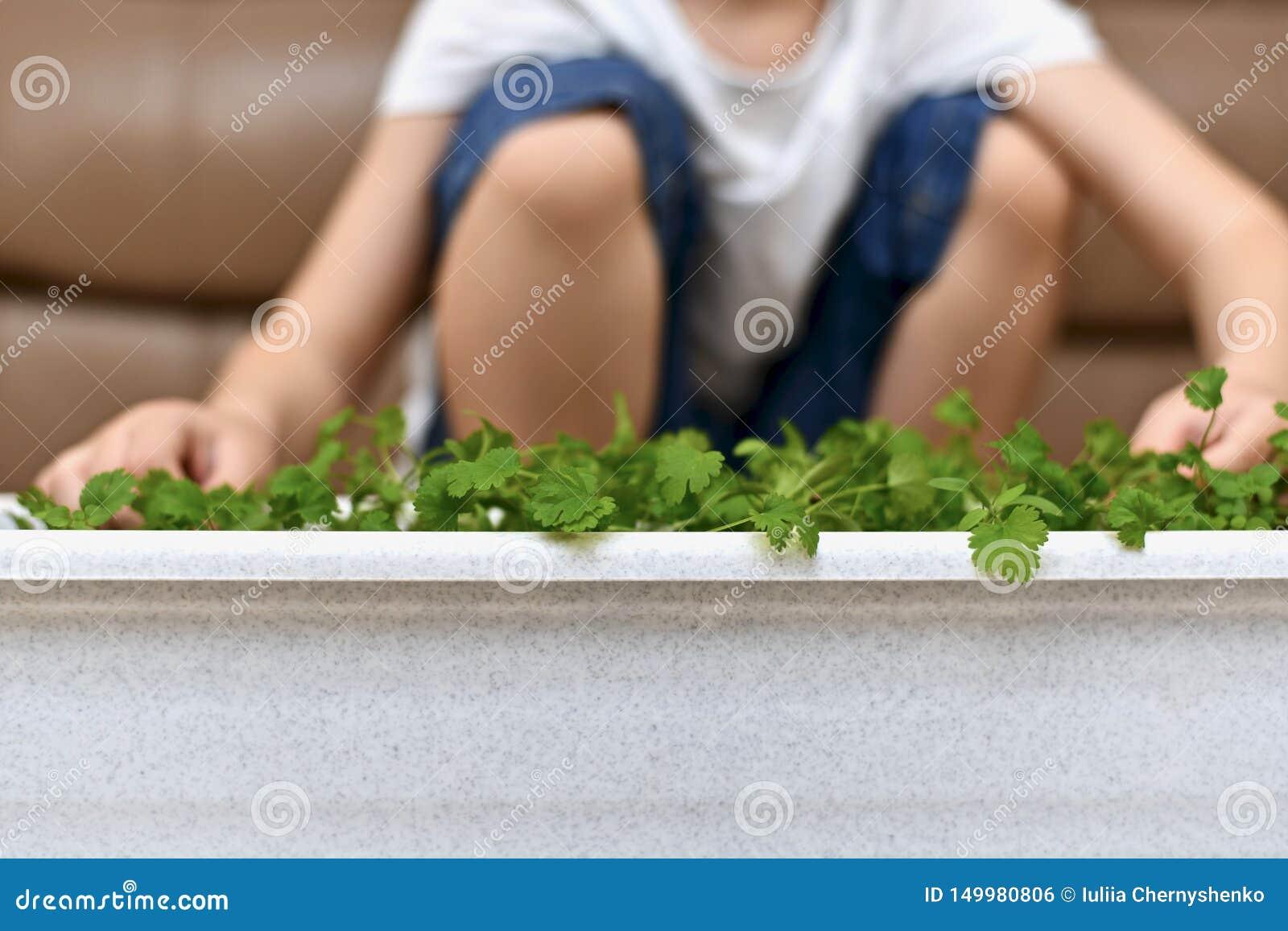 El niño se está sentando cerca de la cosecha crecida
