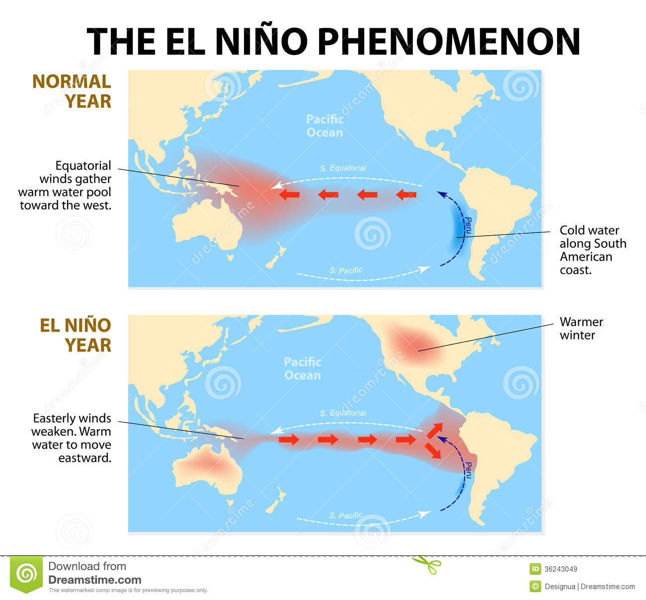 Diagram shows the El Nino phenomenon. El Niño is a disruption of the ...