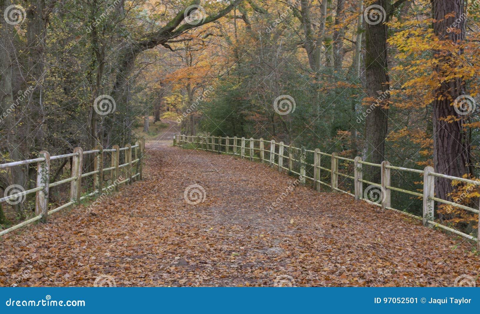 El nuevo bosque en otoño