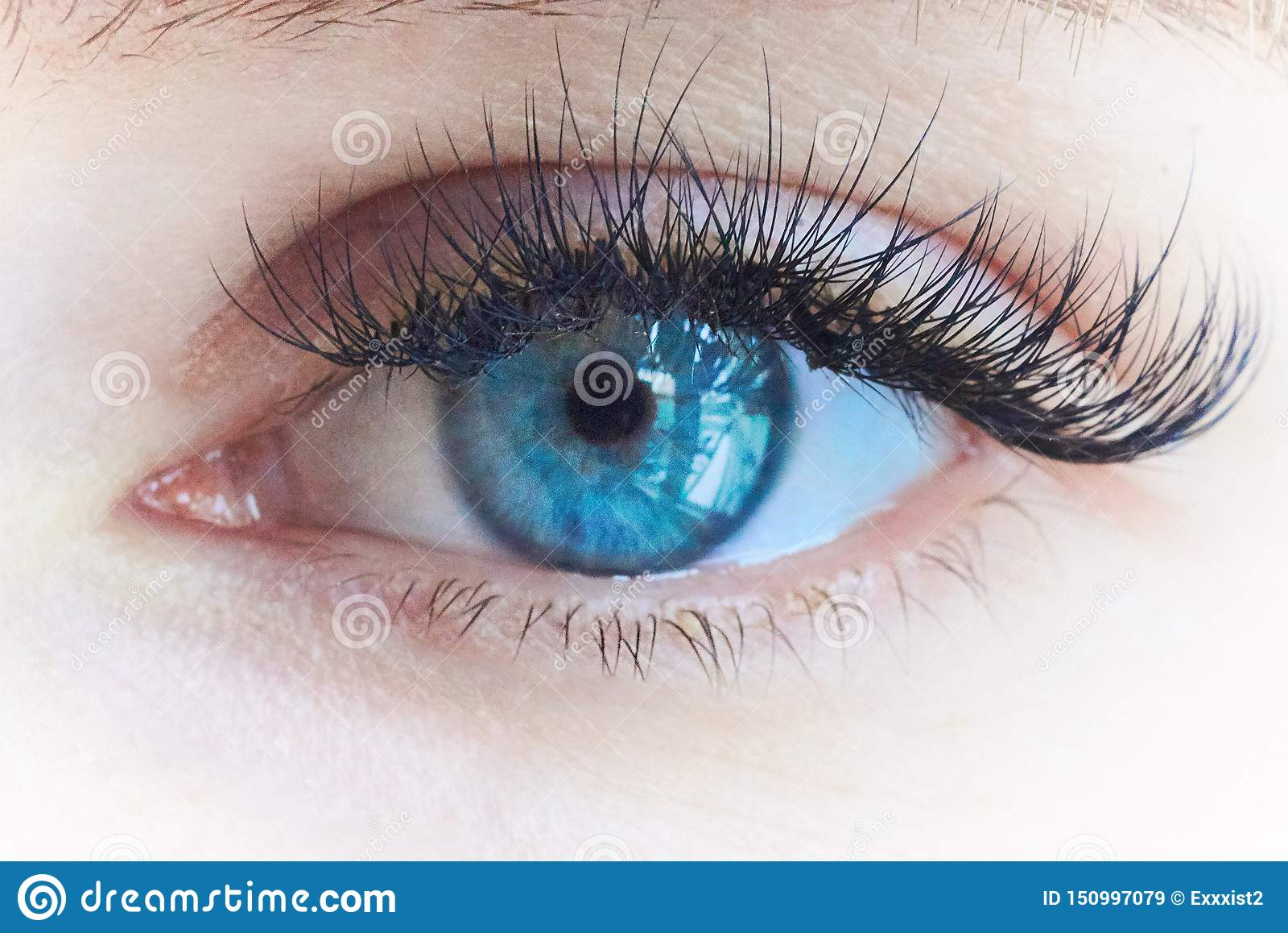 El ojo de la muchacha hermosa joven con los latigazos grandes