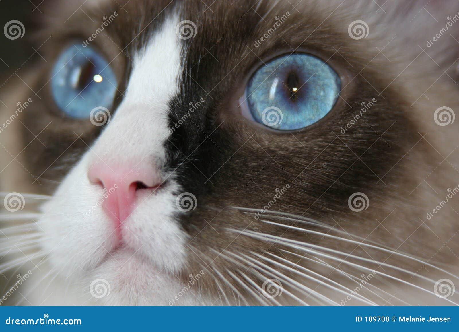 El ojo más azul