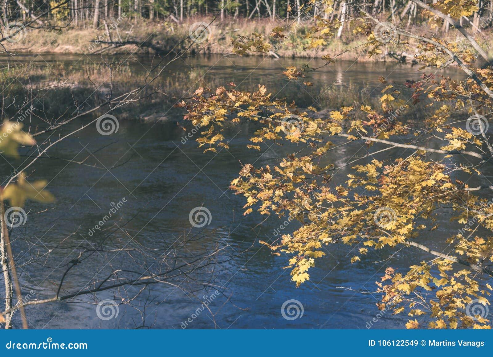 El oro del otoño coloreado se va en la luz del sol brillante - vintage fi retro
