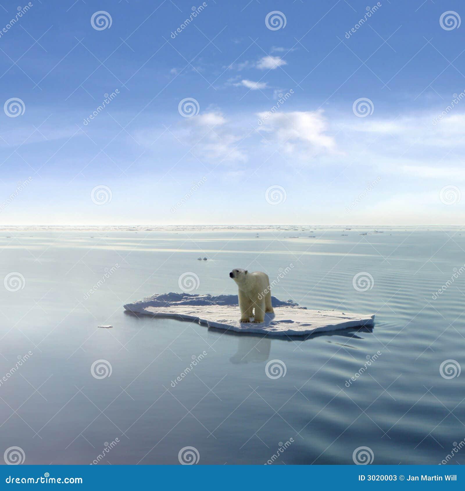 El oso polar pasado