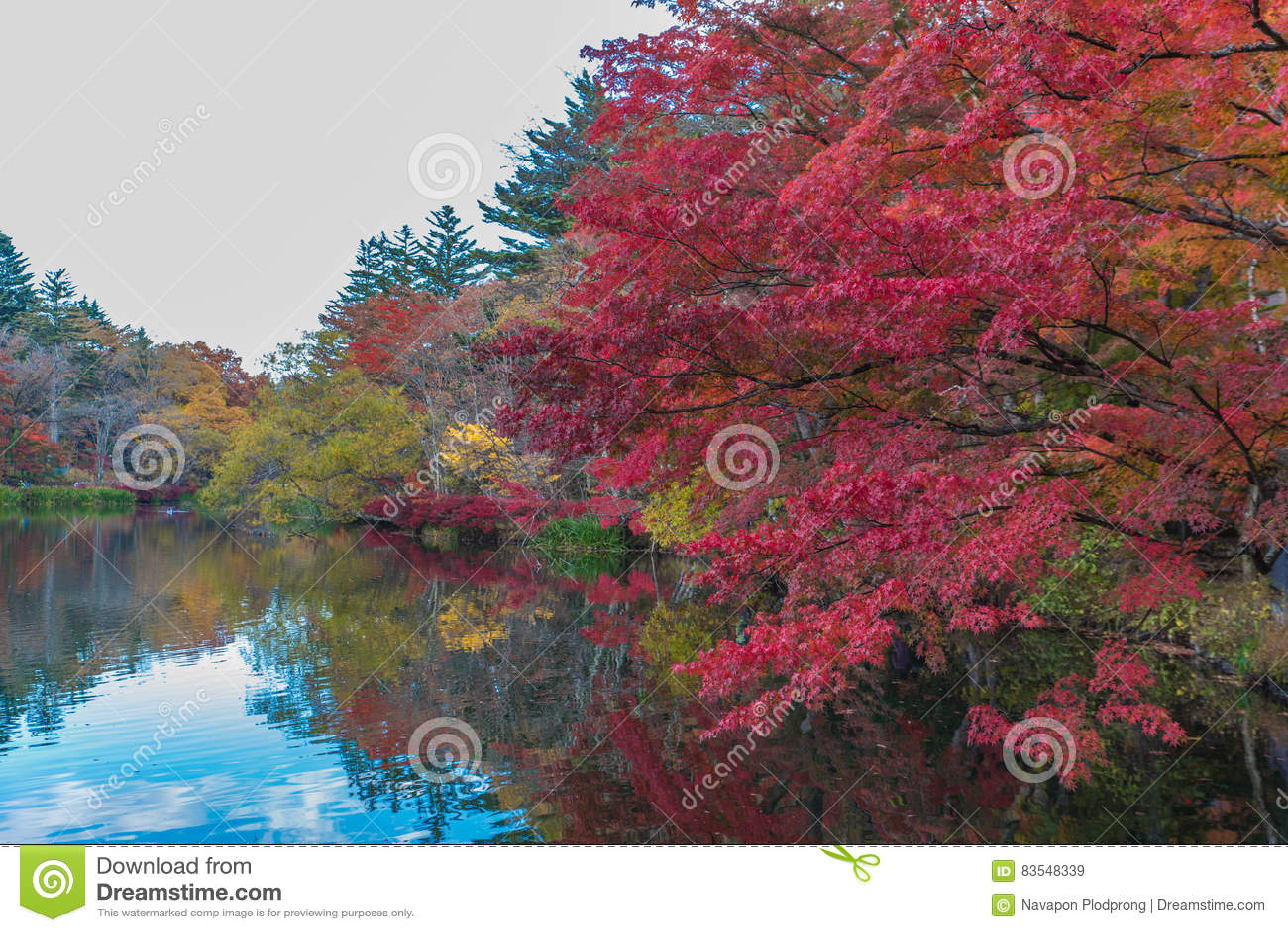 El otoño colorea la charca