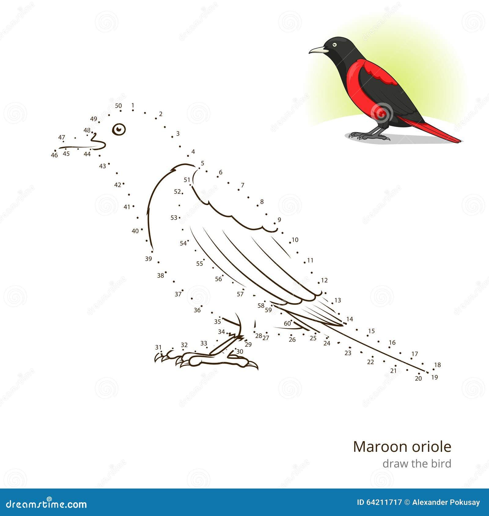 El pájaro marrón del oriole aprende dibujar vector