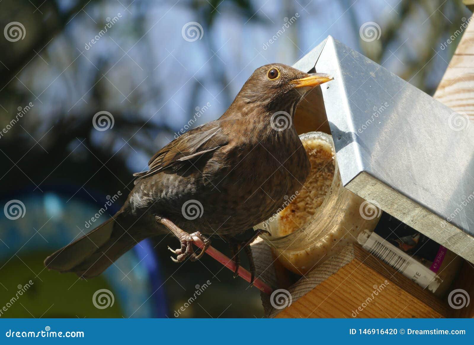 El pájaro se sienta cerca de su hogar en día de verano