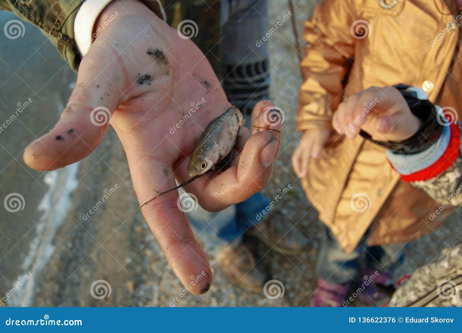 El padre muestra a niños un pequeño pescado