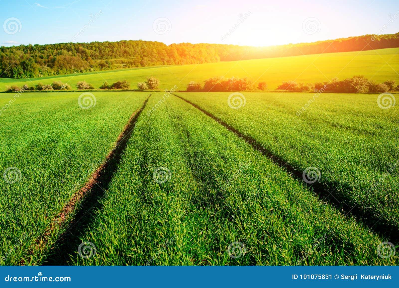 El paisaje de la mañana con el campo verde, rastros de tractor en sol irradia