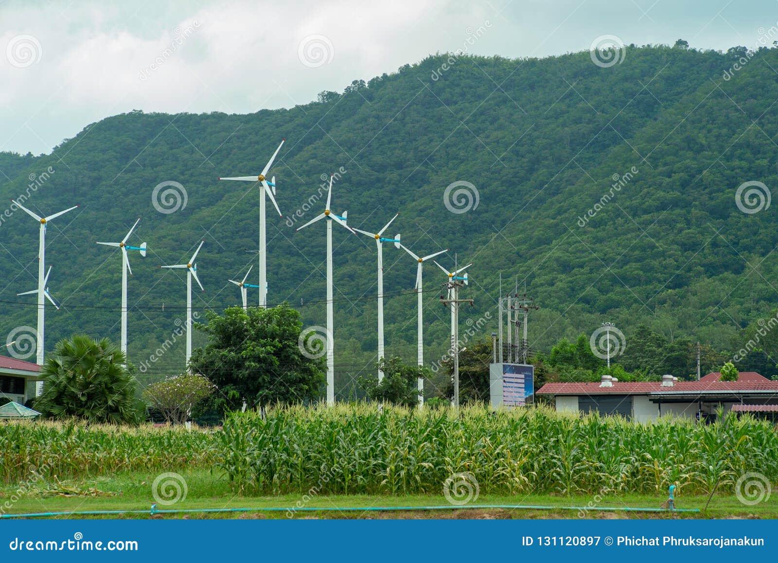 El paisaje de molinoes de viento cultiva para generar la electricidad
