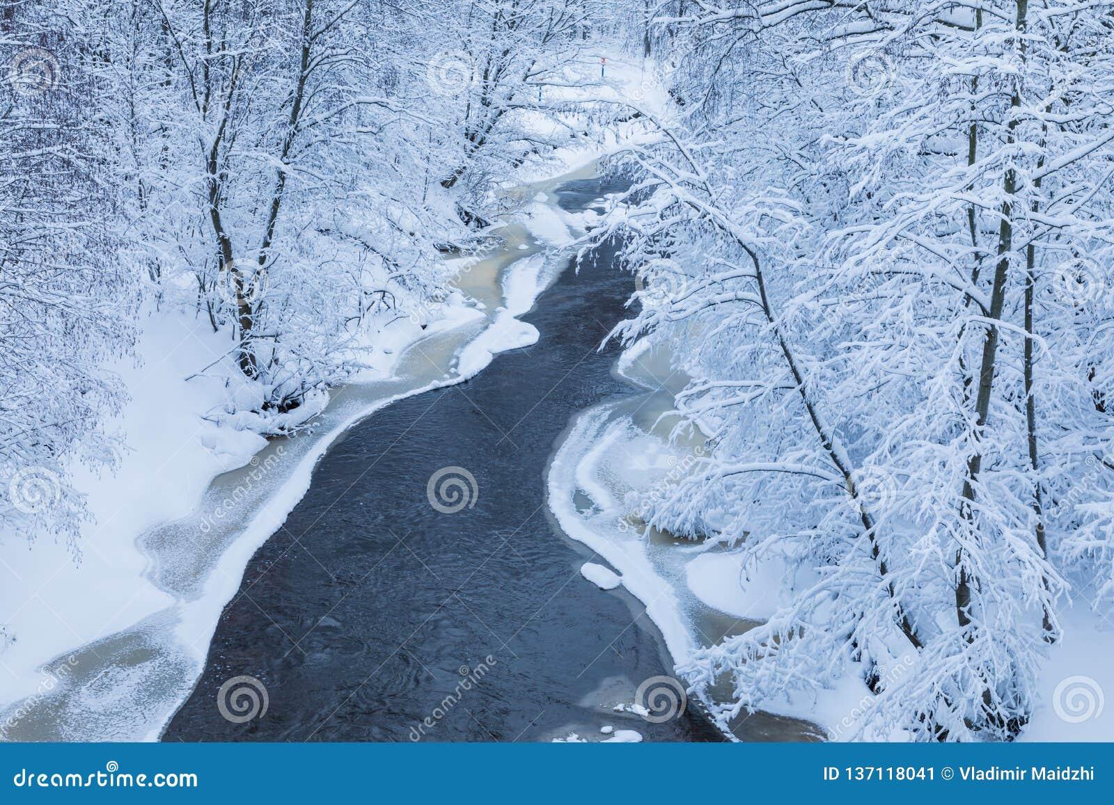 El paisaje del pequeño río o del arroyo en el bosque hermoso del invierno o en el parque