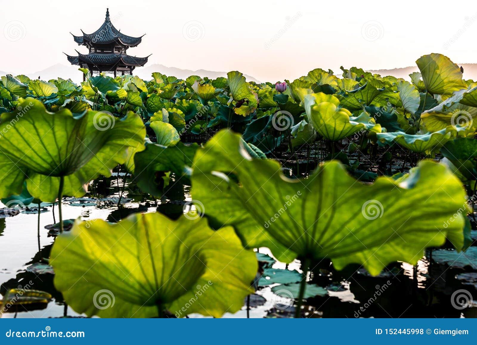 El paisaje hermoso del paisaje del lago del oeste Xihu en Hangzhou CHINA