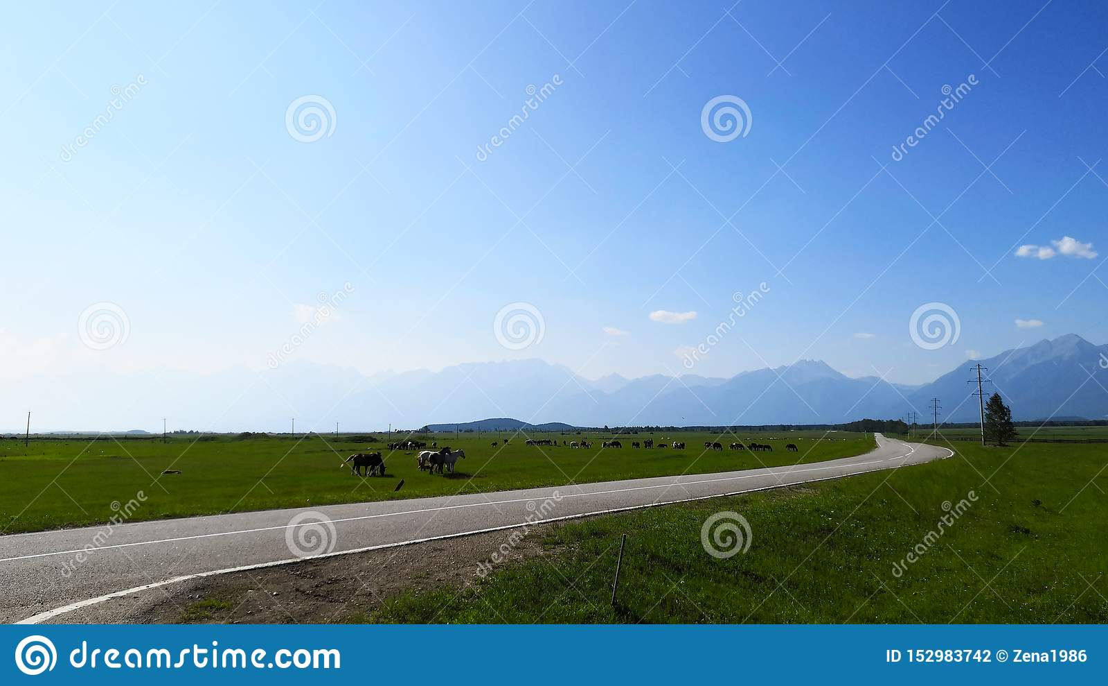 El pasto de caballos en un campo del paisaje en un día de verano en las montañas dio un día claro contra el cielo azul