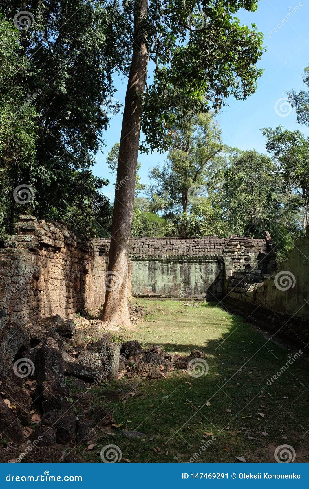 El patio del complejo dilapidado del templo en Indochina Ruinas antiguas en el bosque