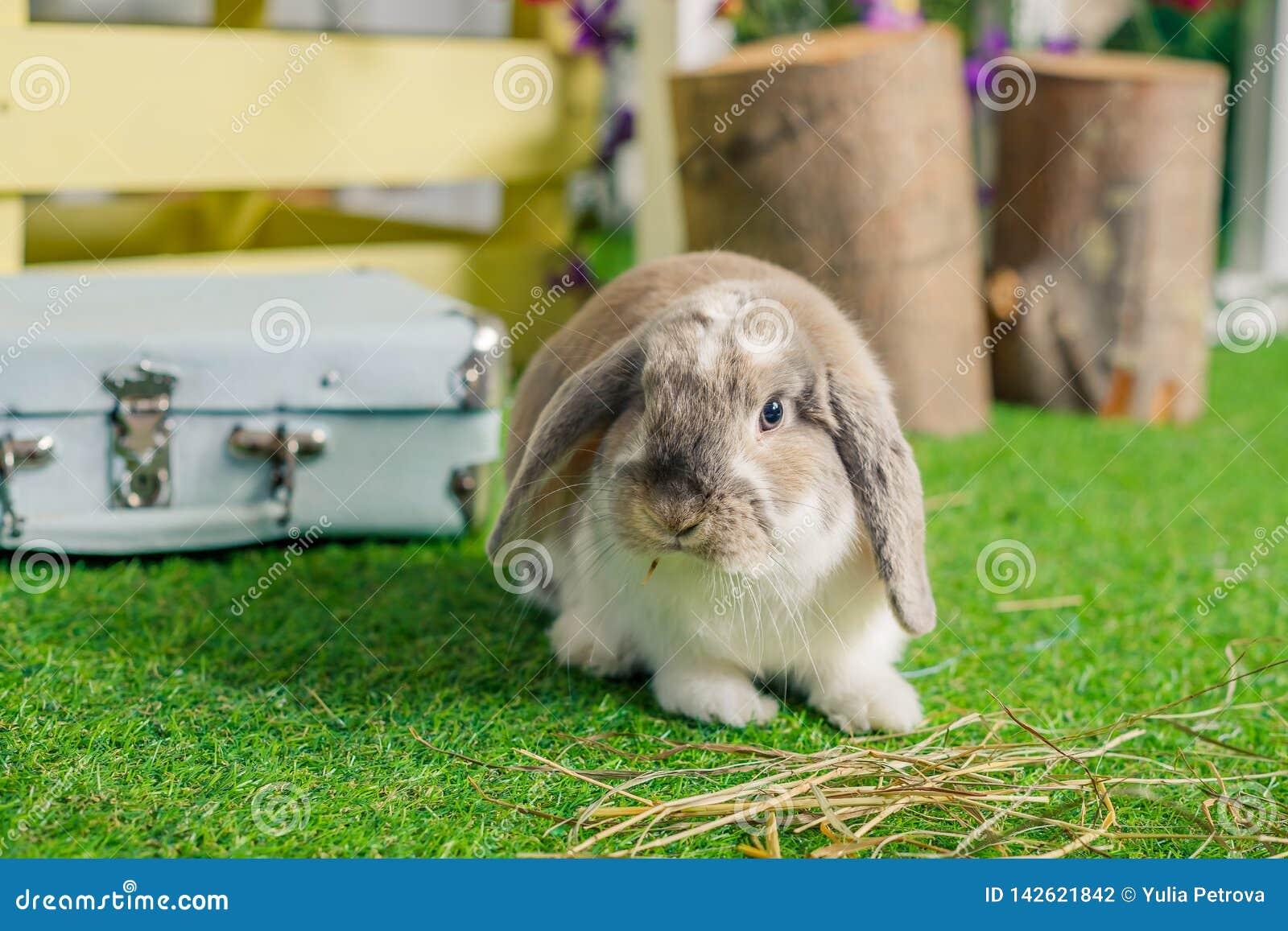El pequeño blanco mullido lindo poda el conejo de conejito espigado que se sienta en hierba simbólico de Pascua y de la estación