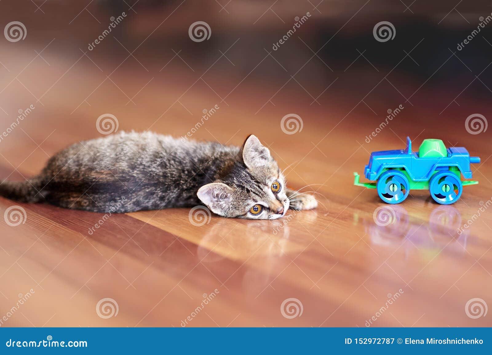 El pequeño gato lindo del color del gato atigrado miente en el piso de madera con los niños juega el coche Gatito bonito con los