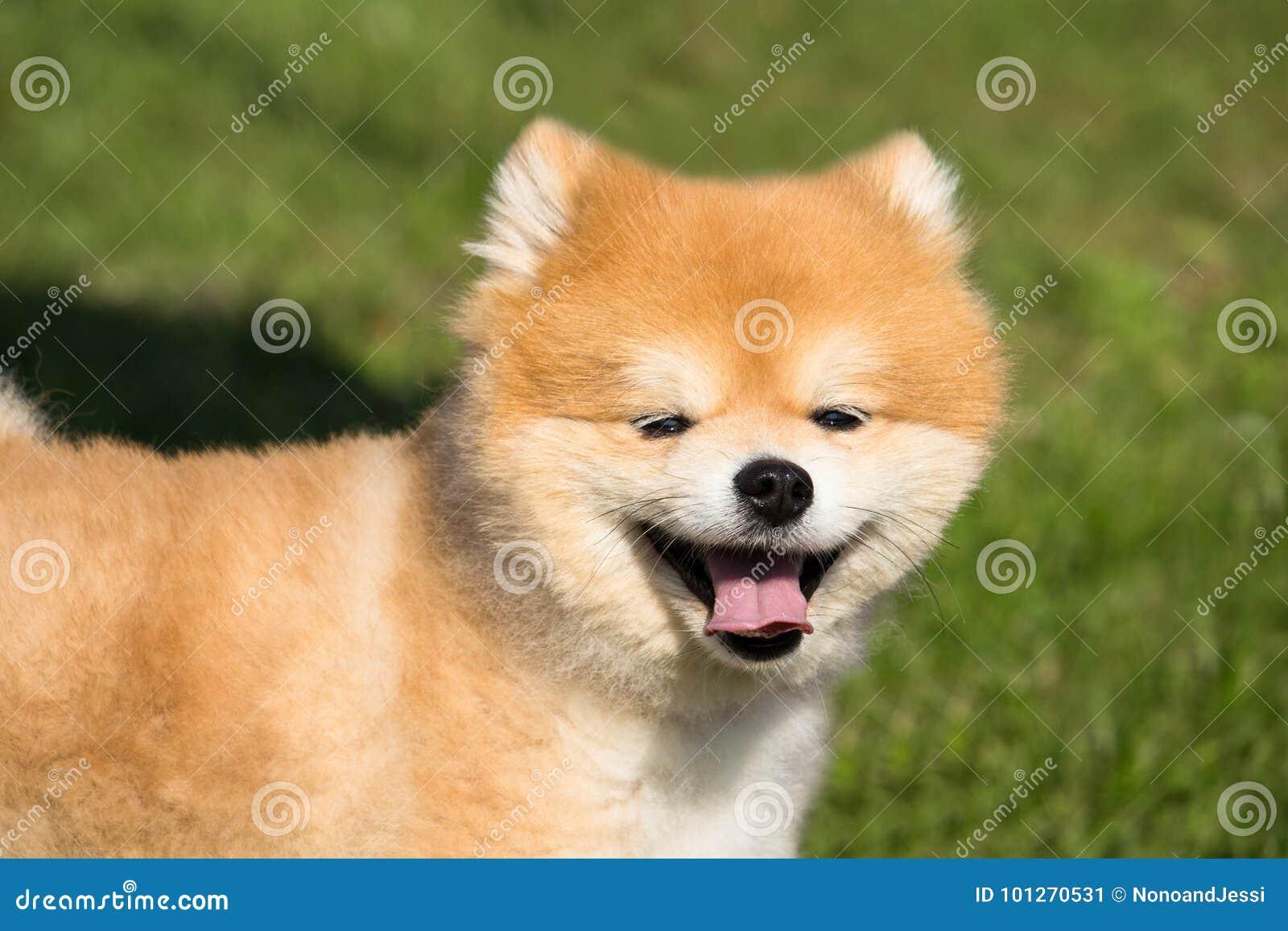perro zorro