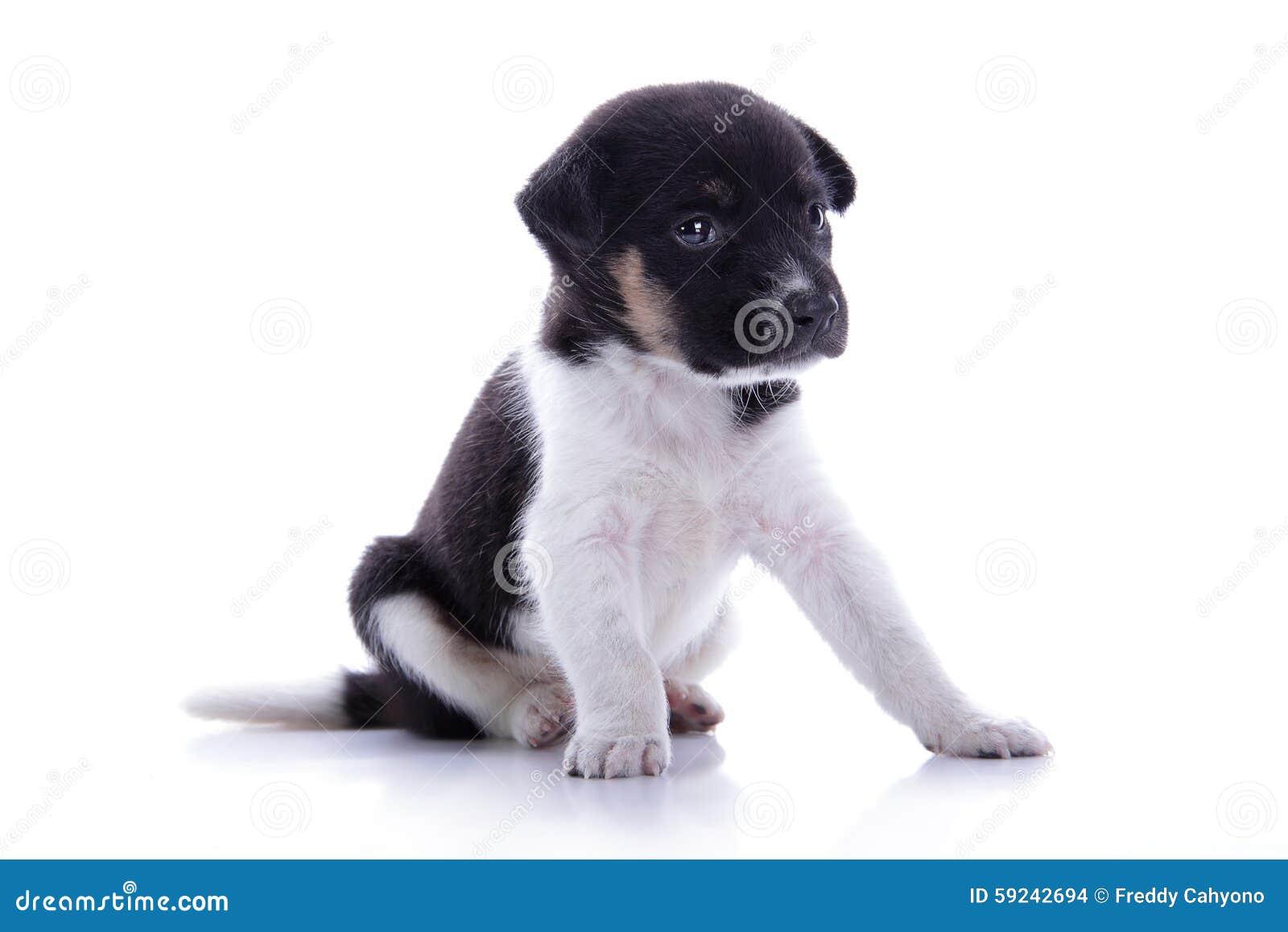 Download El Perrito Adorable Parece Triste Foto de archivo - Imagen de abajo, perro: 59242694