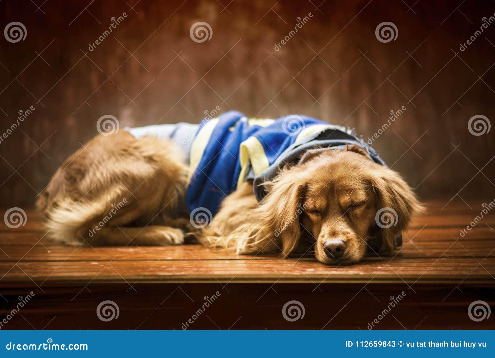 El perrito está durmiendo en el invierno del sol muy lindo y precioso