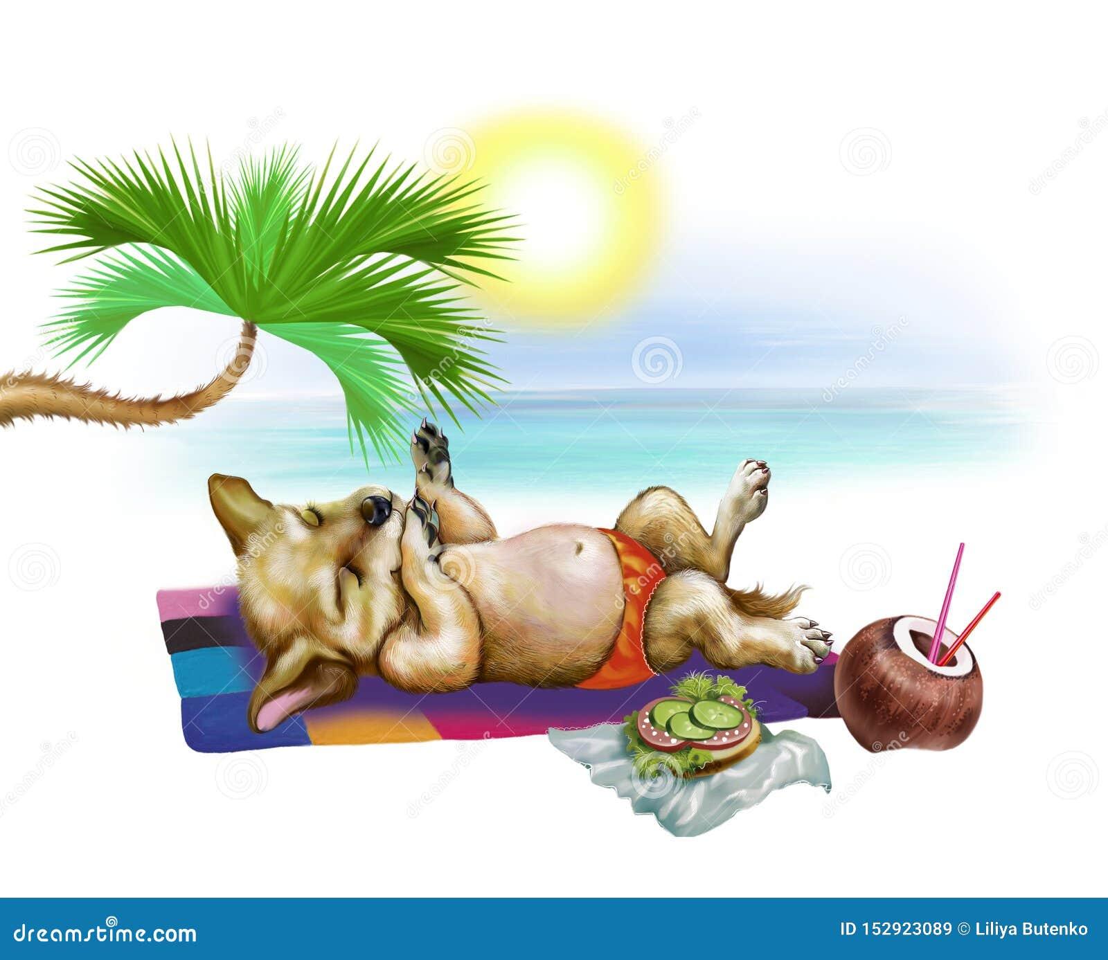 El perrito toma el sol
