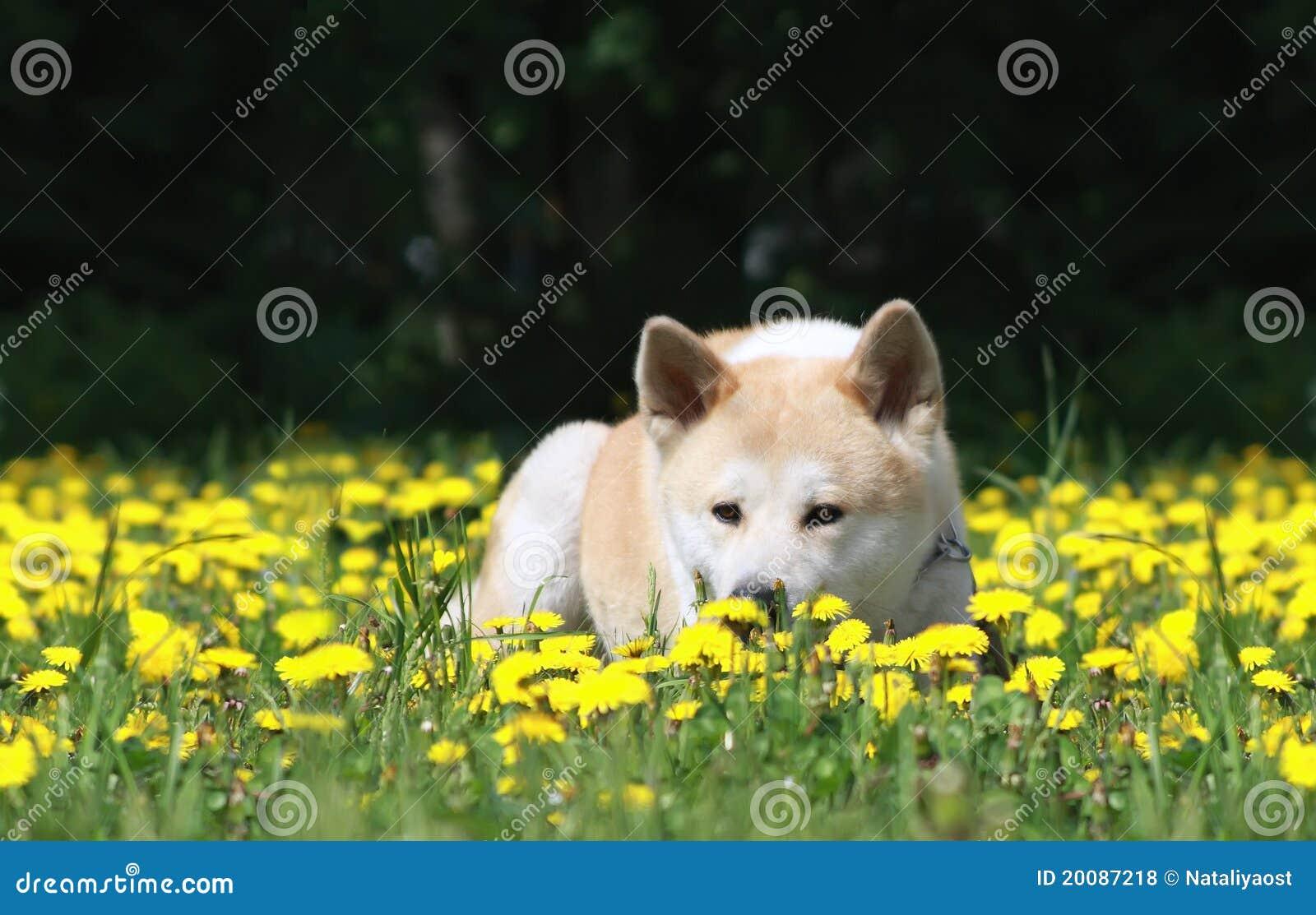 En caso de williamhill poker rezension live-stream williamhill duda razonable, es decir, de perros sin raza clara, se ...