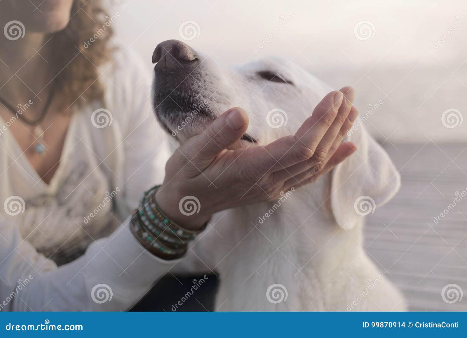 El perro cariñoso coloca su bozal en su mano principal del ` s