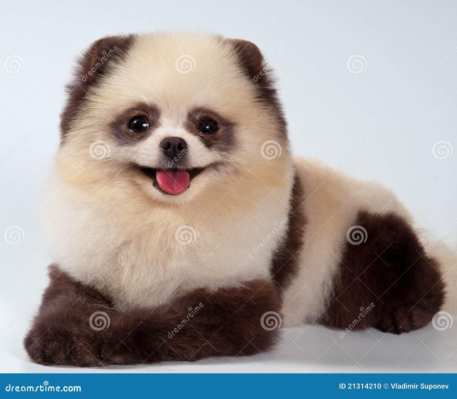 Panda  Definition of Panda by MerriamWebster