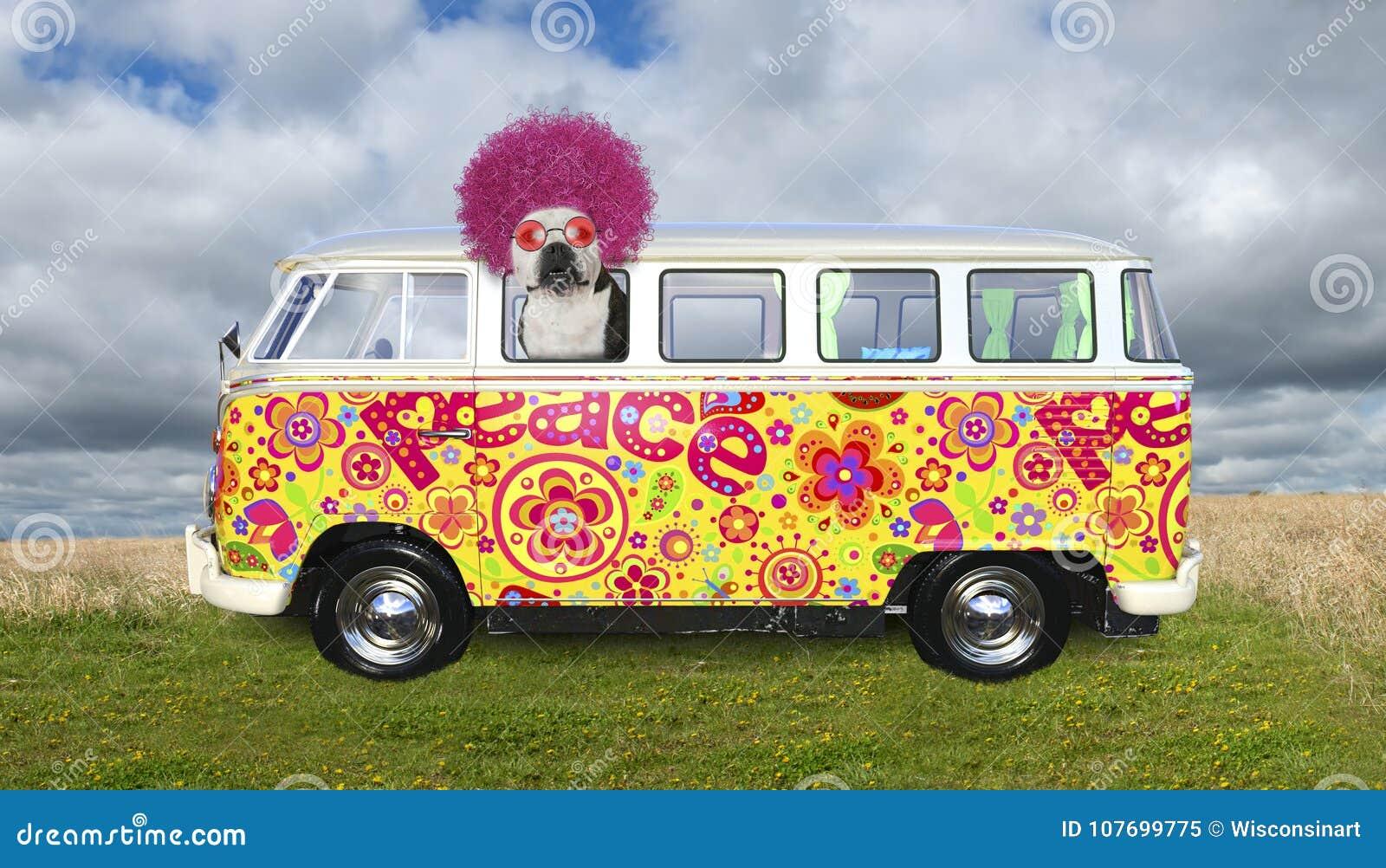 El perro divertido del hippie, VW transporta