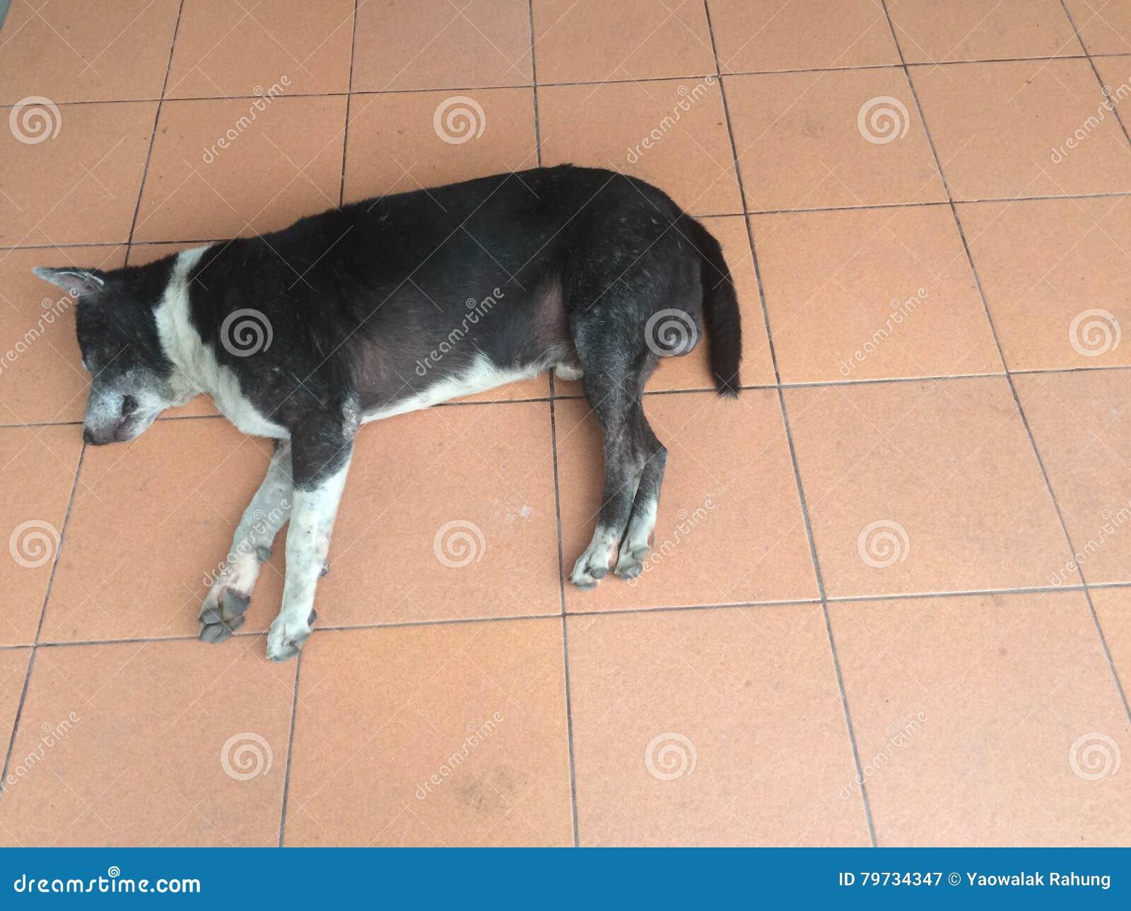 El perro dormía