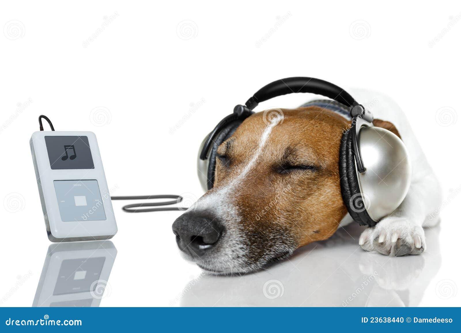El perro escucha la música