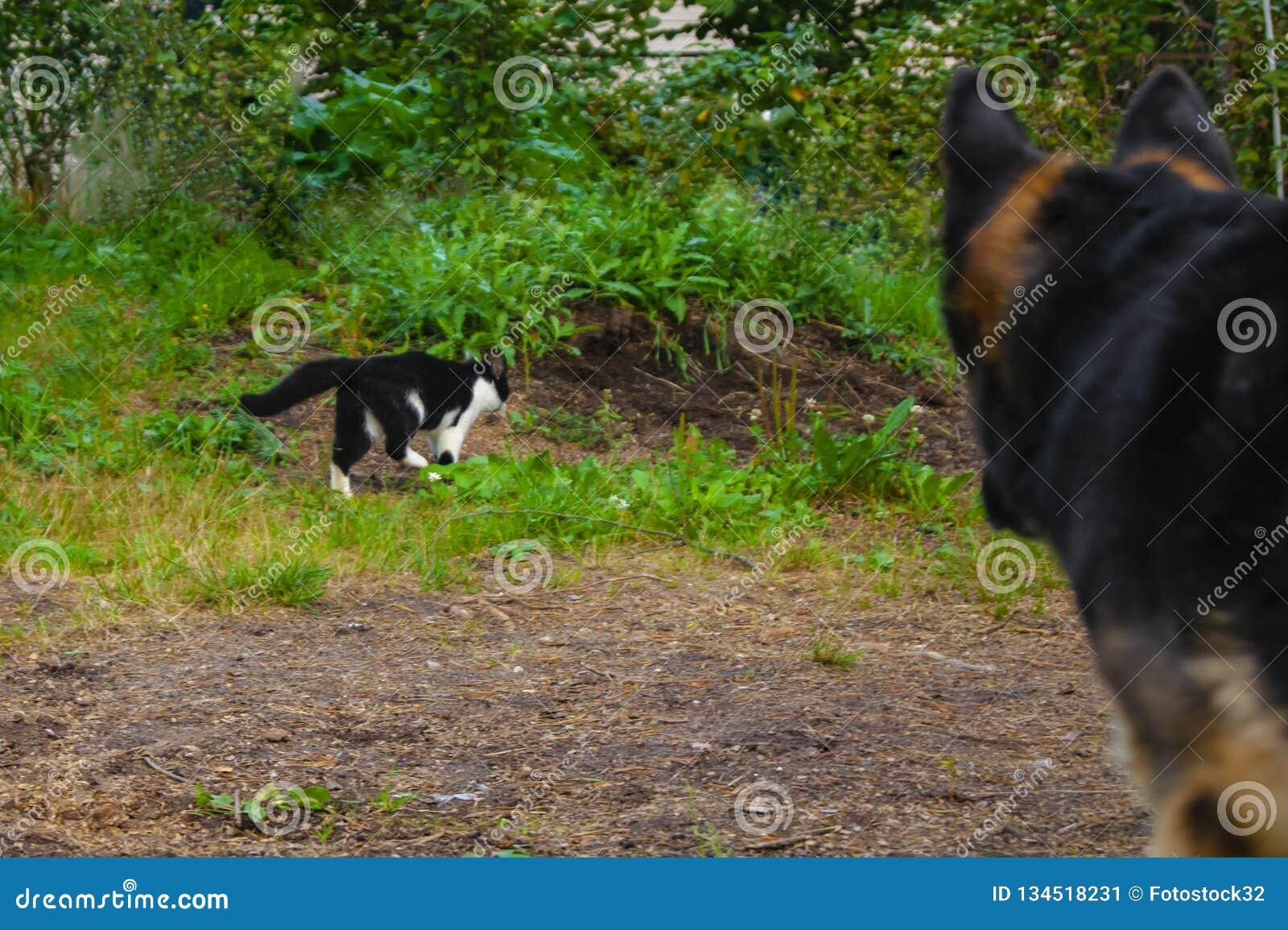 El perro está mirando el gato en naturaleza