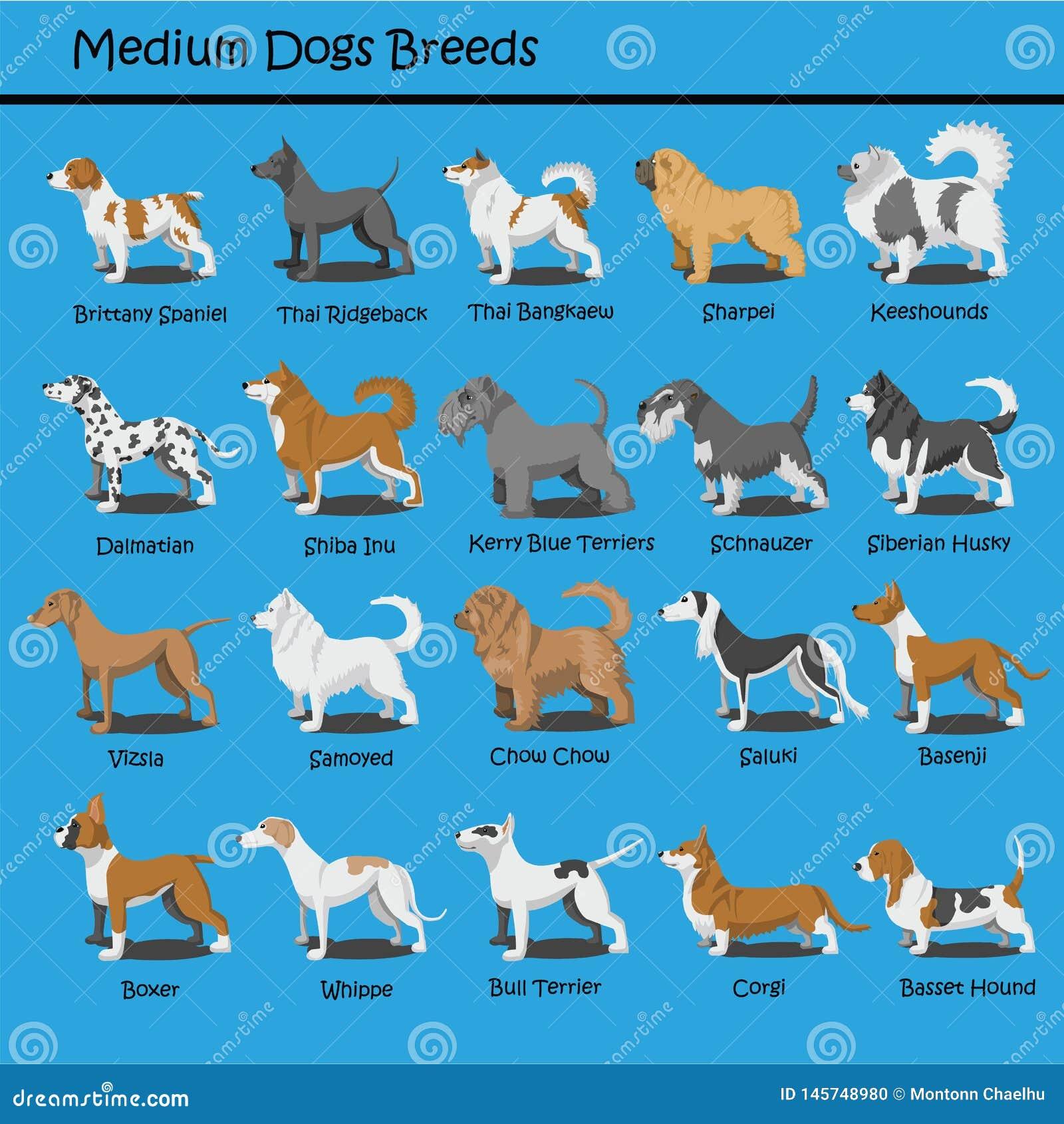 El perro medio cría el perro de perrito lindo del vector del diseño de la historieta del perro que las historietas diseñan