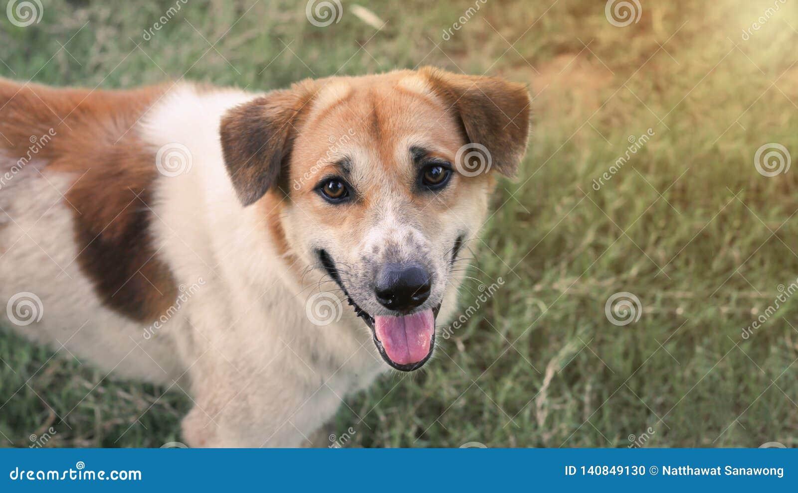El perro moreno hizo un gesto con cientos sonrisas en la cara