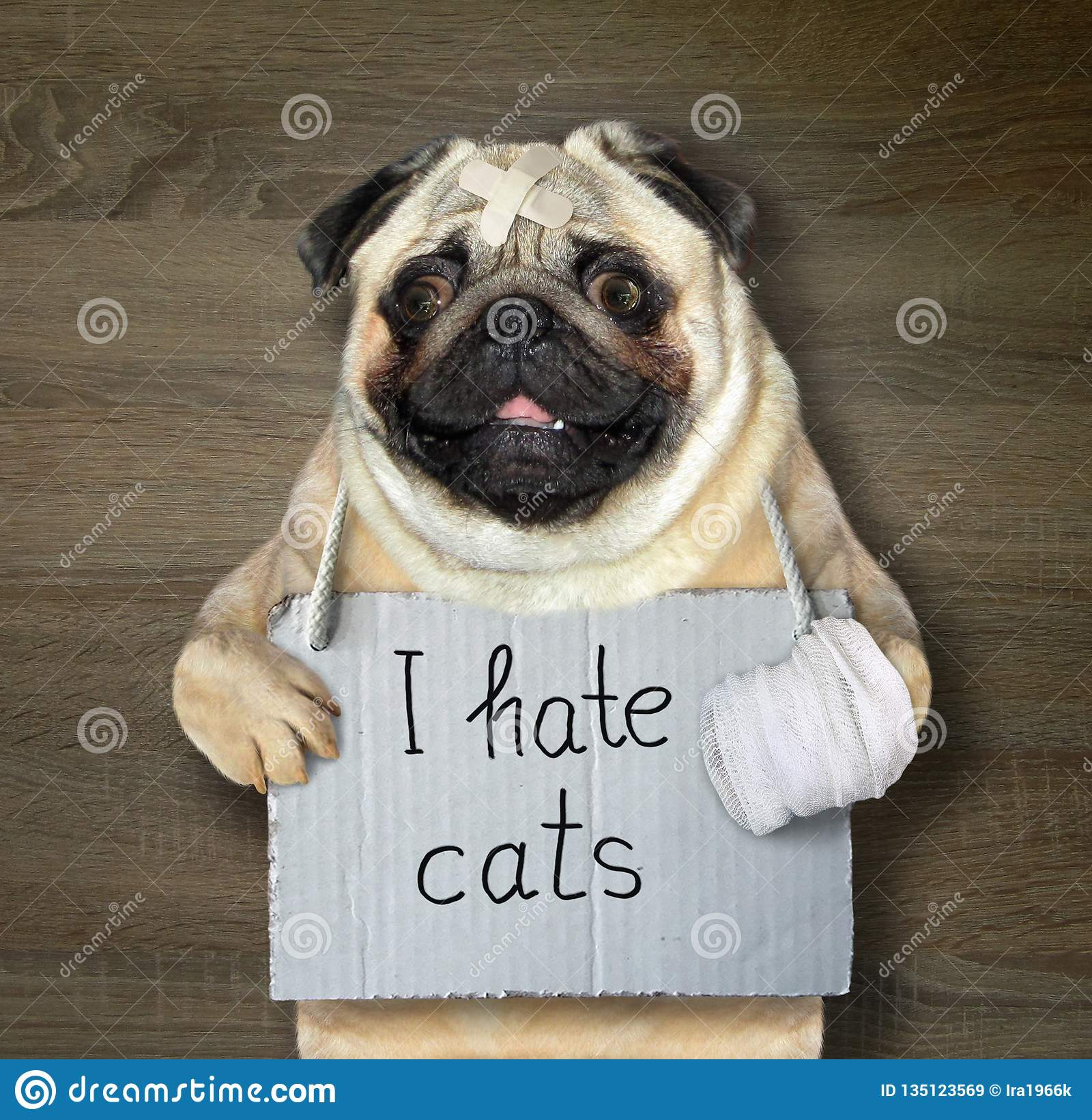 El perro odia los gatos