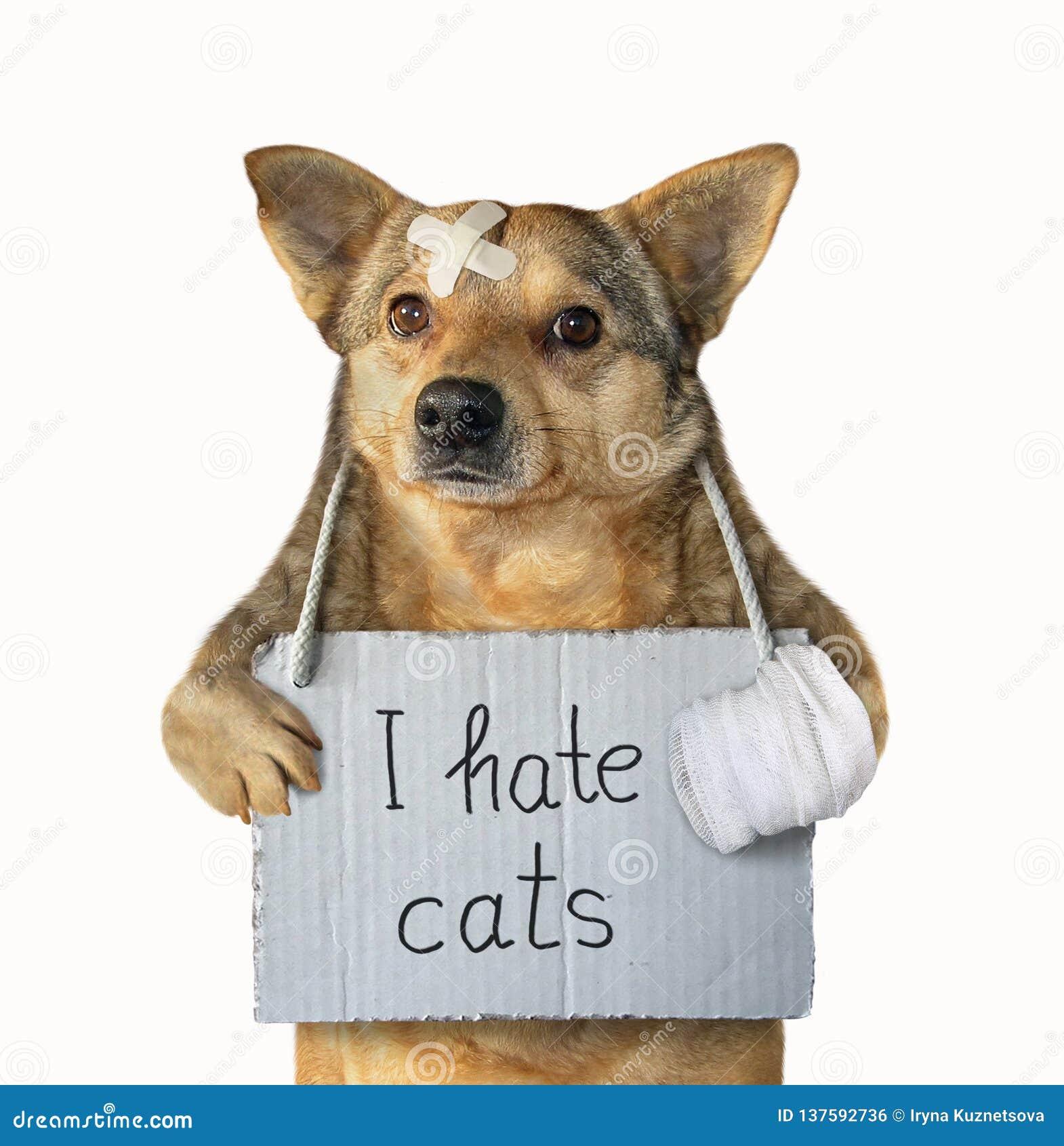 El perro odia los gatos 3