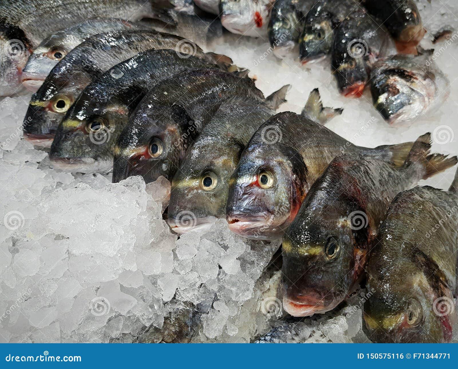 El pescado, dorado, perca de lucio en el mercado de pescados miente en el hielo