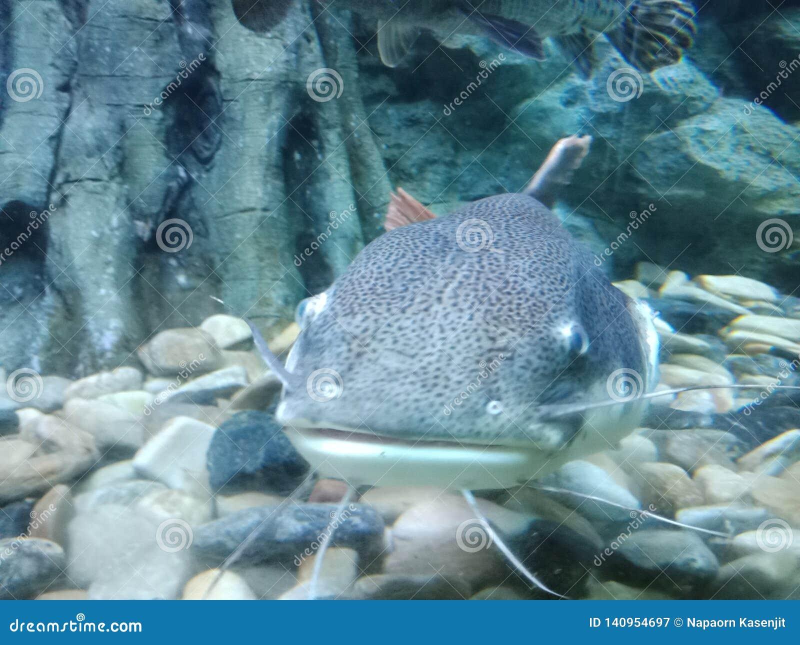 El pescado es hueso presionado los pescados encontró en características del agua dulce y del mar