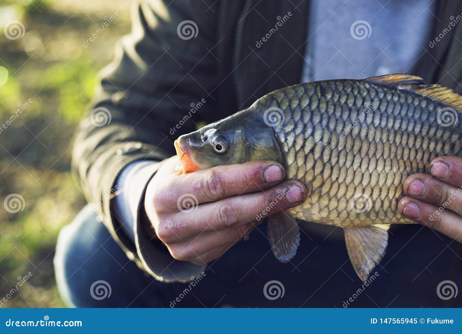 El pescador en el lago cogi? una carpa vacaciones que pescan concepto