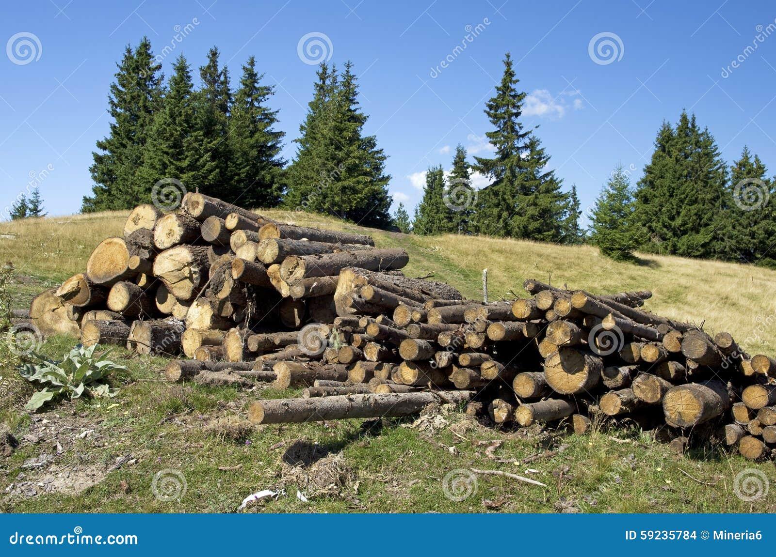 El pino abre una sesión las montañas