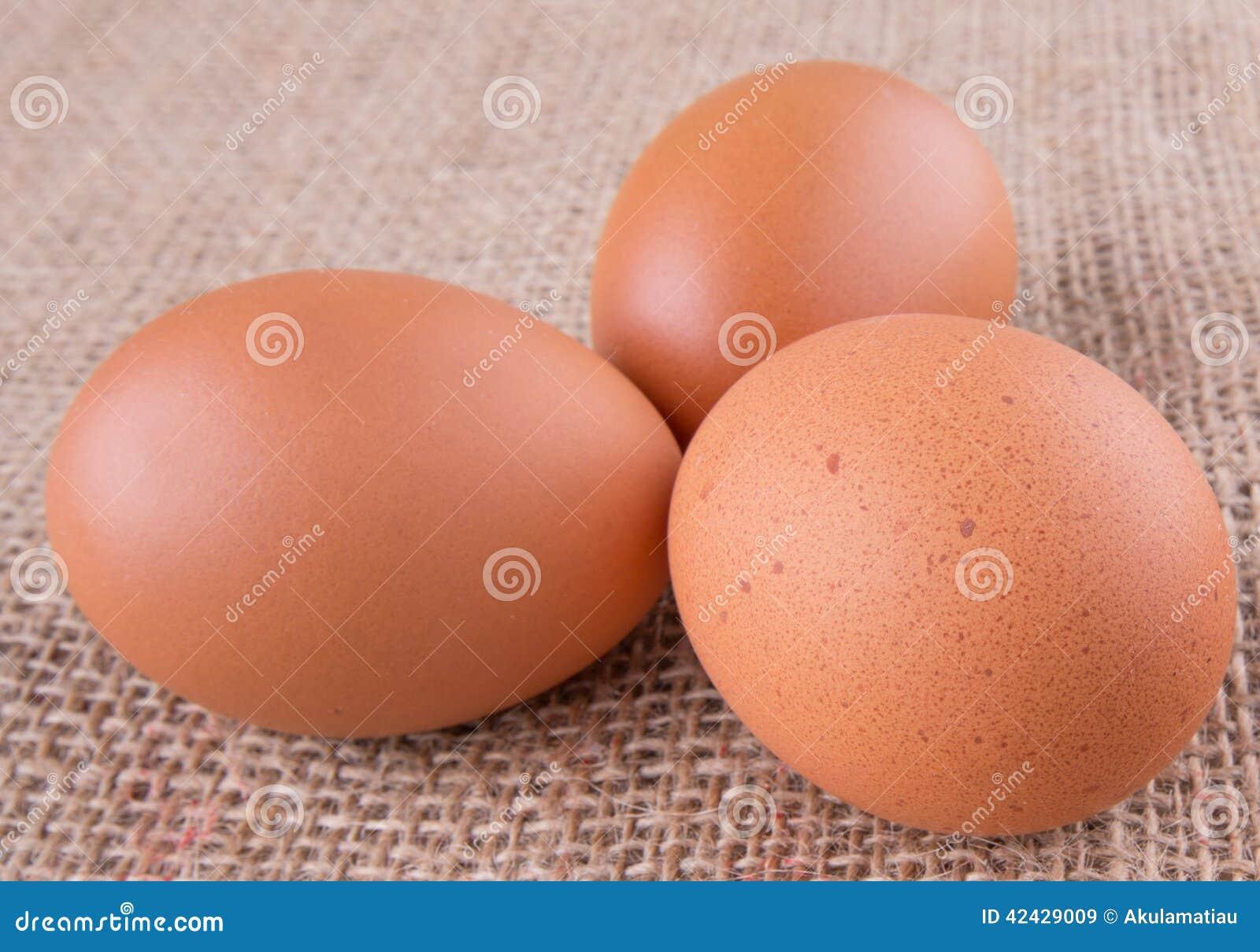 El pollo Eggs V