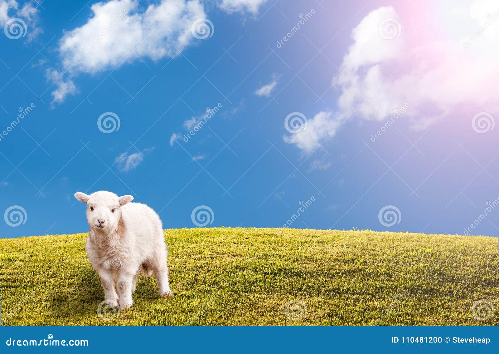 El prado herboso verde con el cielo azul y pascua paren
