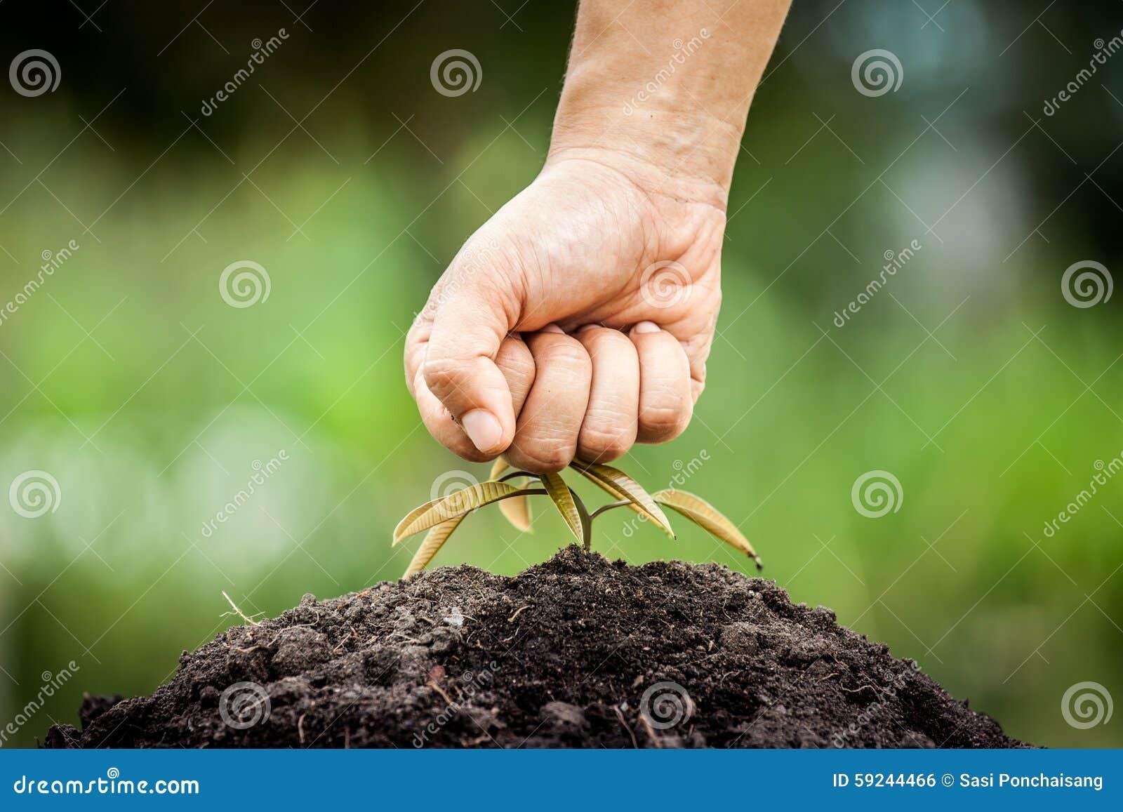 Download El Puño De La Mano Rompió El árbol Joven Foto de archivo - Imagen de suelo, humano: 59244466