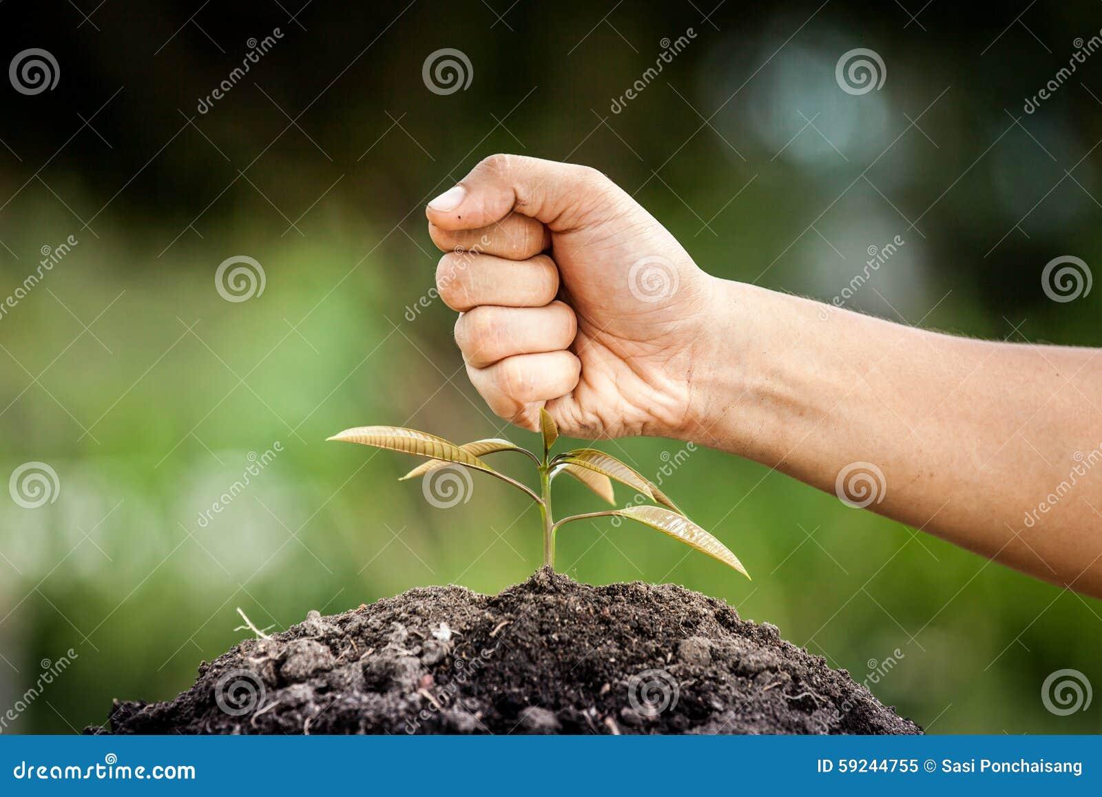 El puño de la mano rompió el árbol joven