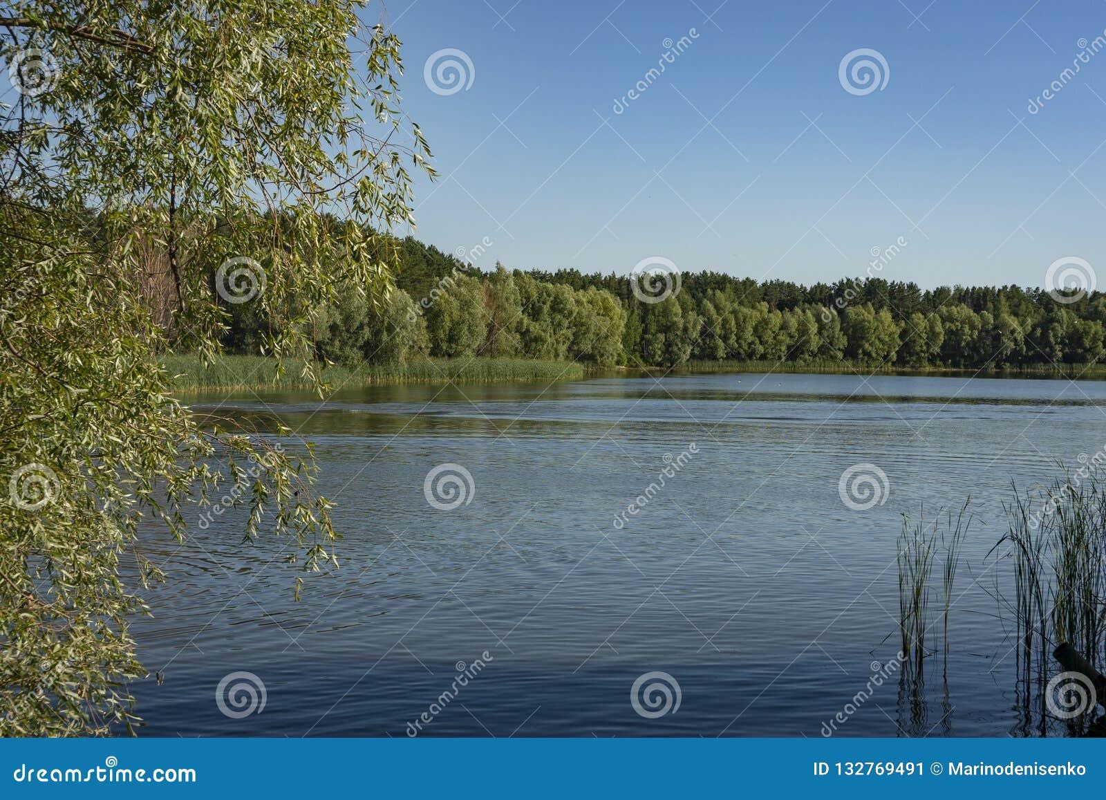 El río fluye a lo largo de las costas boscosas La bahía del río Volga cerca de la ciudad de Ulyanovsk