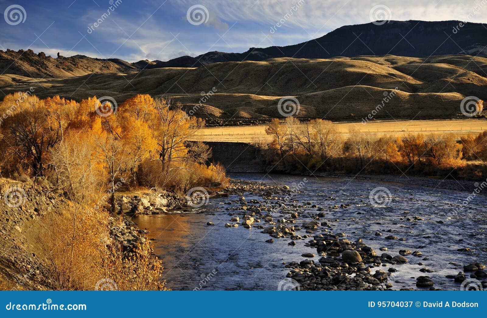 El río y Autumn Leaves Outside Cody de deslumbramiento, Wyoming del Shoshone