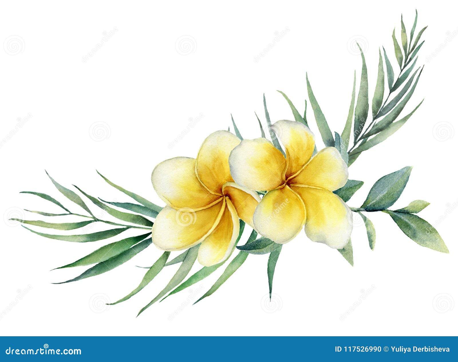 El ramo tropical floral de la acuarela con plumeria y la palma ramifican Frangipani pintado a mano, eucalipto aislado en blanco