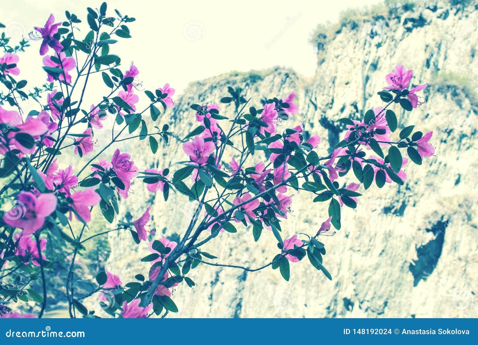 El ?rbol floreciente florece en la estaci?n de primavera rosada de la belleza de la naturaleza Paisaje de la flor de la primavera