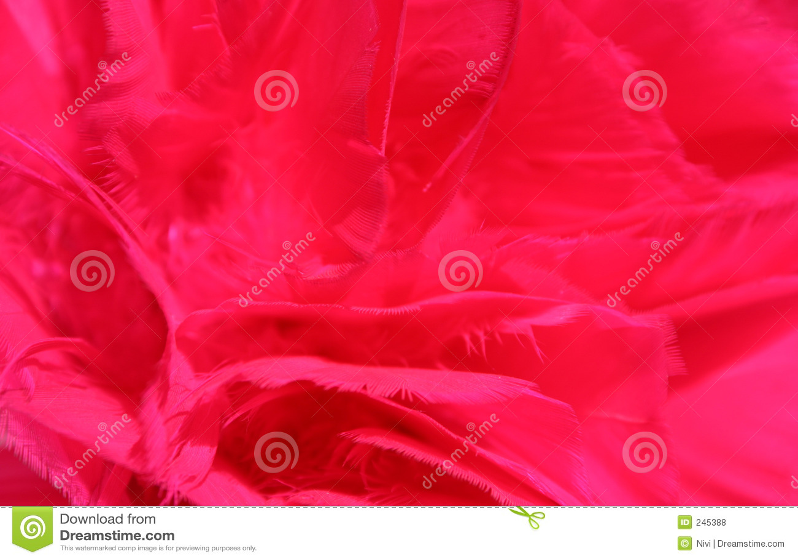 El rojo empluma el fondo _6
