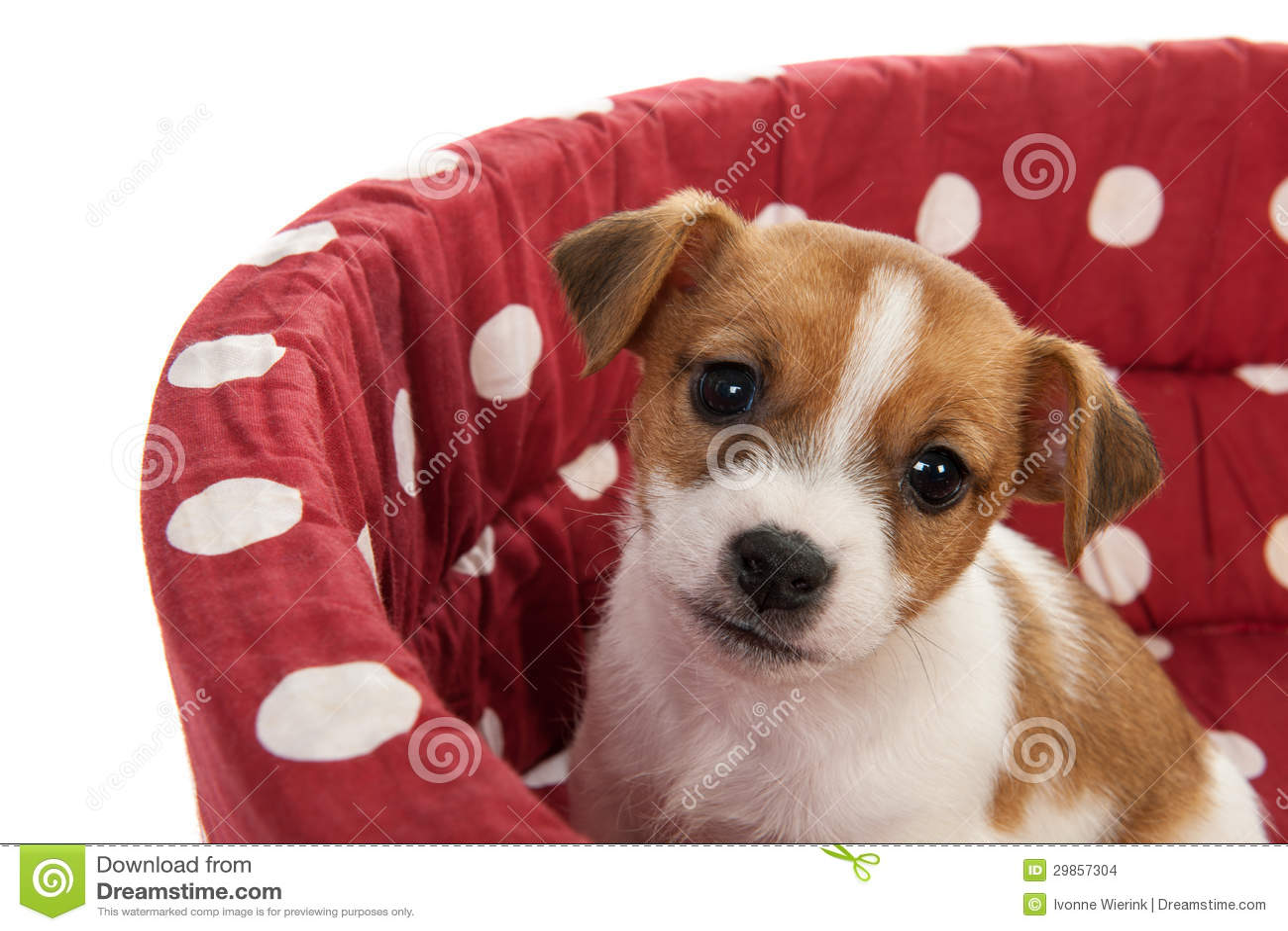 Cama manchada rojo del animal doméstico con el pequeño perrito