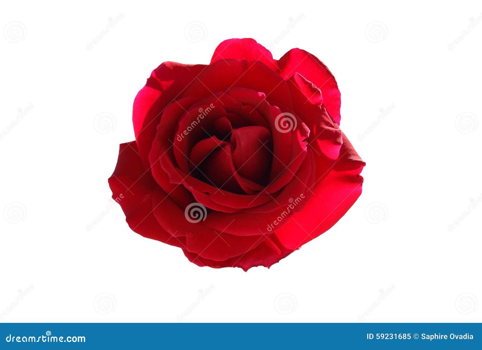Download El rojo se levantó imagen de archivo. Imagen de día, cubo - 59231685