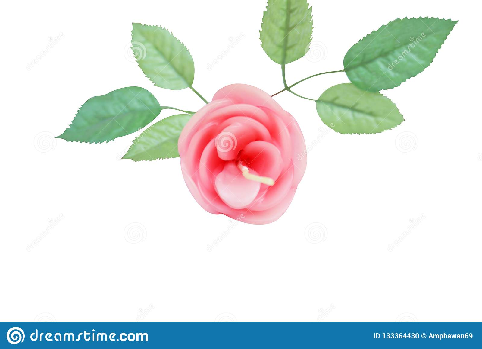 El rosa subió con las hojas aisladas en el fondo blanco, vela del aroma